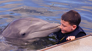 Swimming with dolphins is no longer allowed by TripAdvisor