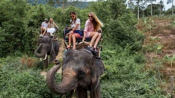 Riding on elephants is no longer allowed by TripAdvisor